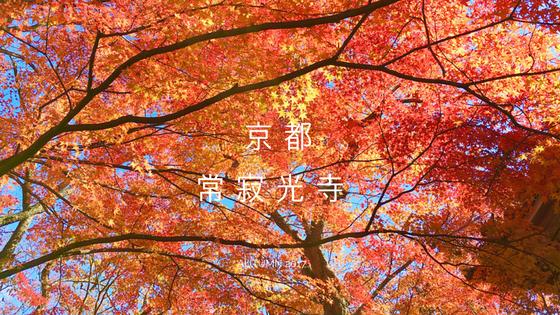 【京都賞楓推薦】必訪嵐山常寂光寺, 難忘的滿天星星楓葉